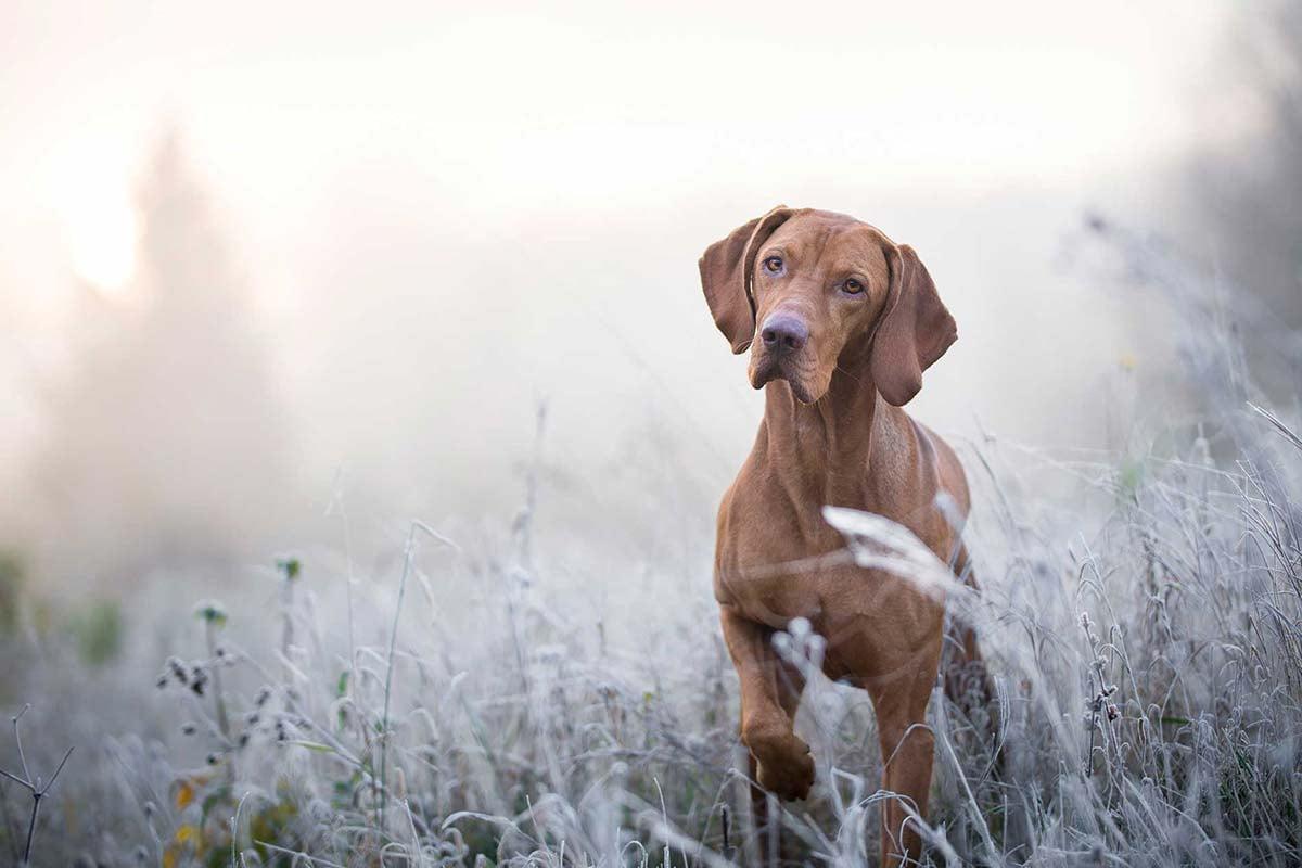 Integricare Animal Health